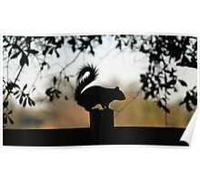 Squirrel Silhouette Poster