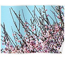 Spring In Bloom - Pink Cherry Blossoms Poster