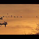 birds like sunsets too by Desiree Salas