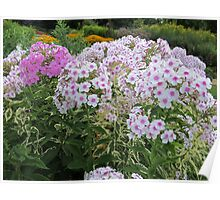 Summer afternoons of Pinks and Plants Poster