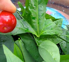 Cedar Bay Cherry and fresh greens rom McGreens! by D. D.AMO