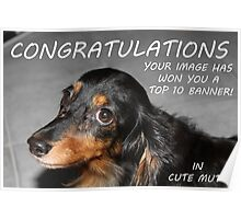TOP TEN Banner Cute Mutts Poster