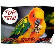 TOP TEN BANNER Birds! Birds! Birds! Poster
