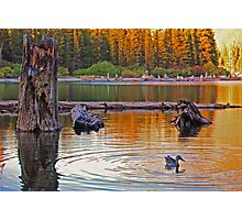 Duck Ripples Photographic Print