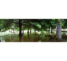 Untitled- Water Trees Photographic Print