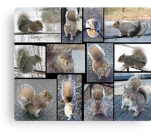 Squirrely Squirrels Canvas Print