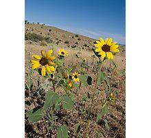 Yellow Desert Flowers - Arizona and Utah Photographic Print