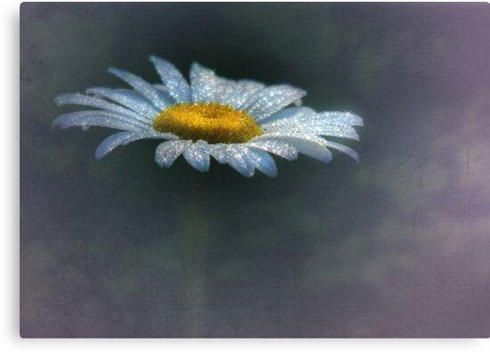 Daisy Daydreams by Lori Deiter