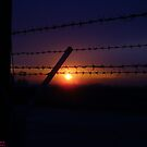 Barbed Sunset by Howard Lorenz