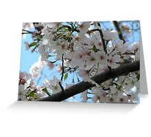 Spring Breeze Greeting Card