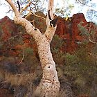 Tree in Australian Desert by akrolith
