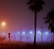Palms in the Fog by Howard Lorenz