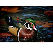 Colorful Swim Photographic Print
