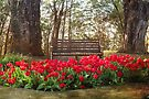 Tulips in the Forest Clearing by Elaine Teague