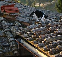 Cat On A Tiled Roof by hans p olsen