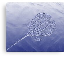 Seedhead In Blue Canvas Print