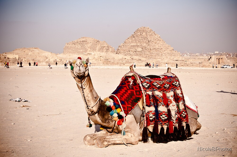 Tourist attraction - Camel at Giza pyramids, Cairo by NicoleBPhotos