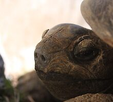 Hello Tortoise - L.A. Zoo by MHarders