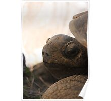 Hello Tortoise - L.A. Zoo Poster