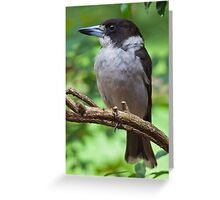 Grey Butcher Bird Greeting Card
