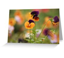 Colourful Pansies Greeting Card