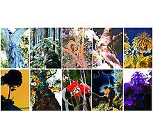 Ten Australian Trees Photographic Print