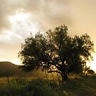Sunset behind a tree by Gustav Snyman
