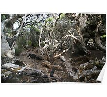 The mythical creatures of Goblin Swamp Poster