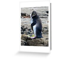 Yellow Eyed Penguin Greeting Card