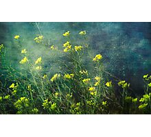 Water Weeds Photographic Print