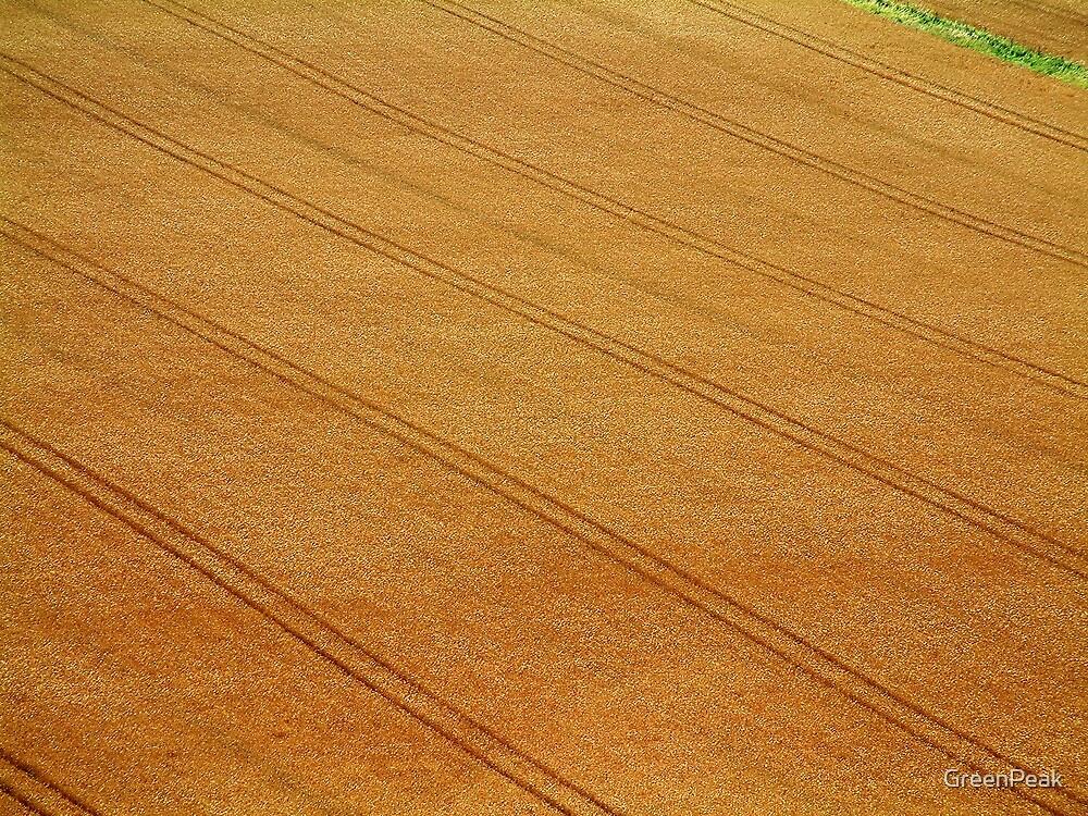 Golden Brown by Paul  Green