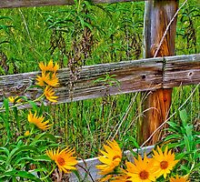 Daisys Of A Diffrent Color by Ray Wells