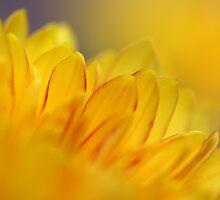 YellowDream by RosiLorz