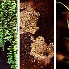 Tarkine Textures by oddoutlet