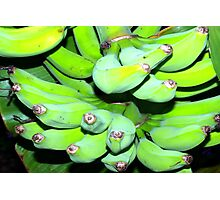 Green bananas Photographic Print