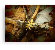 Yellow leaf. Canvas Print