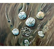 Sand dollars and sand swirls Photographic Print