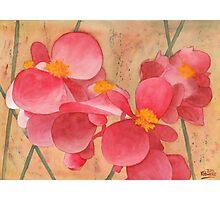Loose Petals Photographic Print