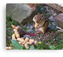 Chipy Returns For More Peanuts Canvas Print