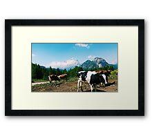 Cows in Dolomites Framed Print