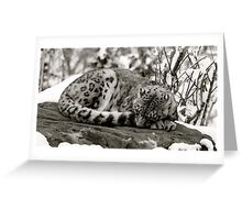 Zoe the snow leopard.  Greeting Card