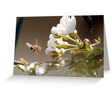 Honey Bee Gathering Nectar Greeting Card