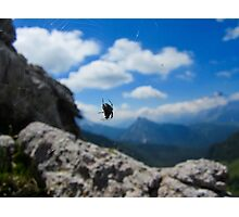 Focused Spider - Dolomites Photographic Print