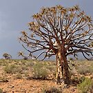 The Quiver Tree by Karen01