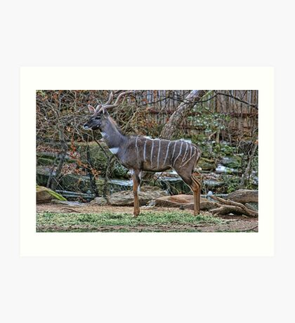 Kudu Portrait Art Print