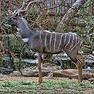 Kudu Portrait by Susan Russell