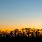 Sunrise   Silhouette   Trees  by James  Key