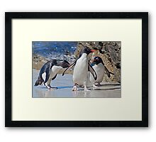 The Rocky Horror Show (Rockhopper Penguins, Falklands) Framed Print