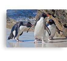 The Rocky Horror Show (Rockhopper Penguins, Falklands) Canvas Print