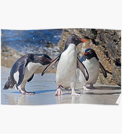 The Rocky Horror Show (Rockhopper Penguins, Falklands) Poster
